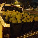 Cara Memulakan Perniagaan Menjual Durian